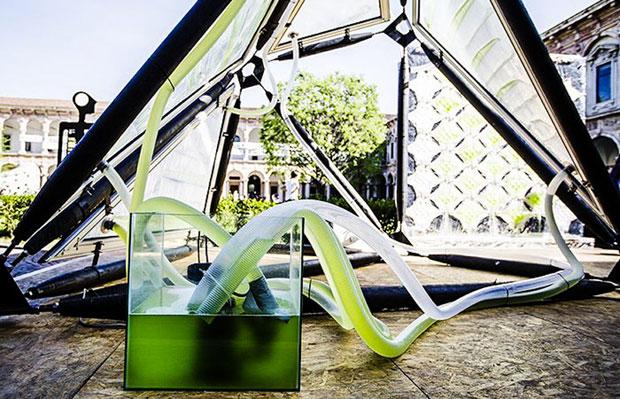5_urban-algae-canopy-awaken