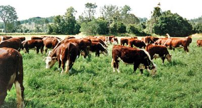 meat-production-is-using-up-over-80%-of-agricultural-land-awaken
