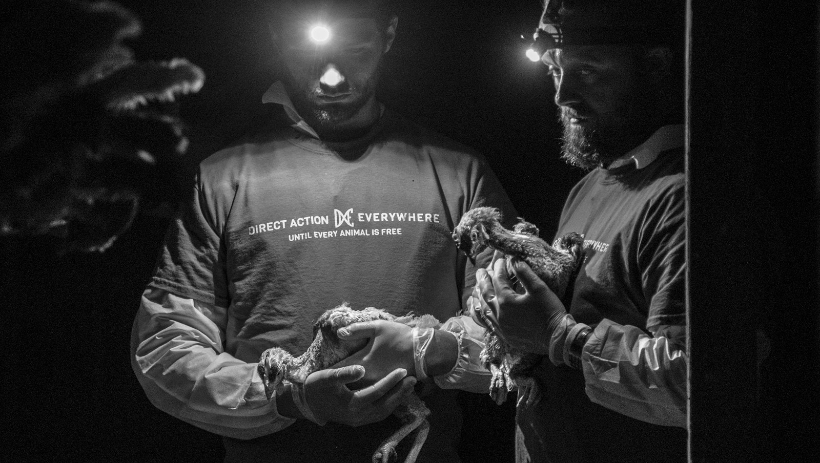 DxE members hold chickens during a rescue mission