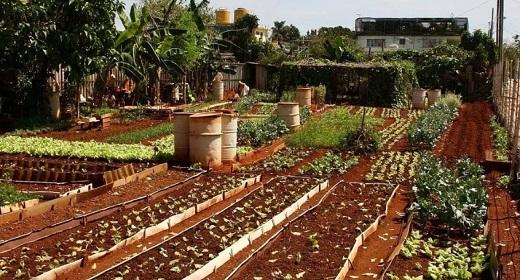 Cuba's Urban Farming