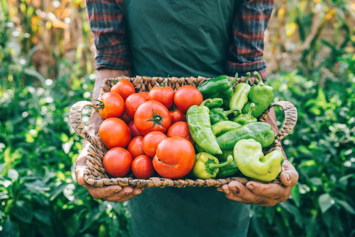 farmer carrying vegetables in basket