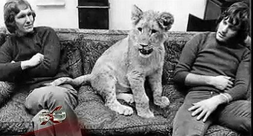 Christian The Lion Reunion