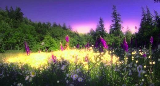 """Wisdom Film - Ram Dass - """"Be Here Now"""""""