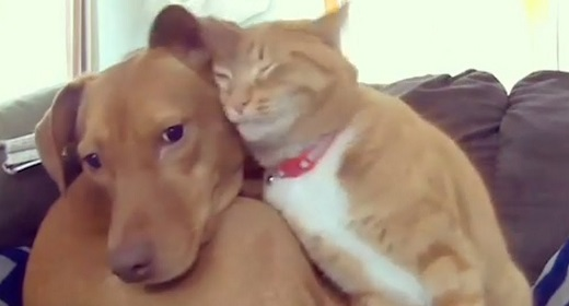 Cat Comforting Anxious Dog While Family's Away