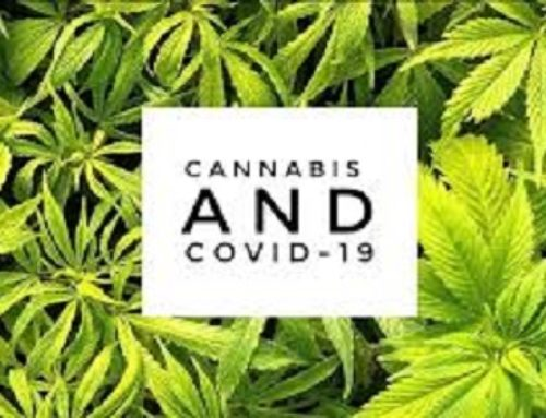 Scientists Believe Cannabis Could Help Prevent And Treat Coronavirus