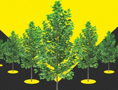 The EU Is Going To Plant 3 Billion Trees By 2030