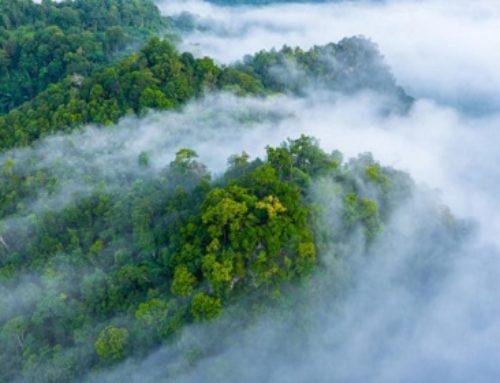 Planting Trees Doesn't Always Help With Climate Change