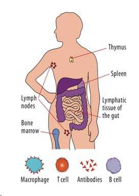 immune-system-awaken