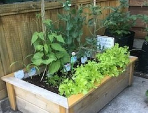 Children Growing Their Own Food: Why Children Need To Learn This Important Skill