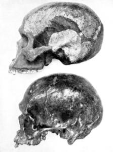 Piltdown-Man-Skull-awaken