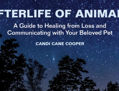 Awaken Interviews Candi Cane Cooper Pt 3 – AfterLife Of Animals