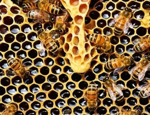The Sacred Wisdom Of Honey Bees