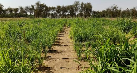 desert-control-crops-awaken
