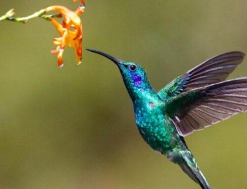 The Secret Of Hummingbird Medicine