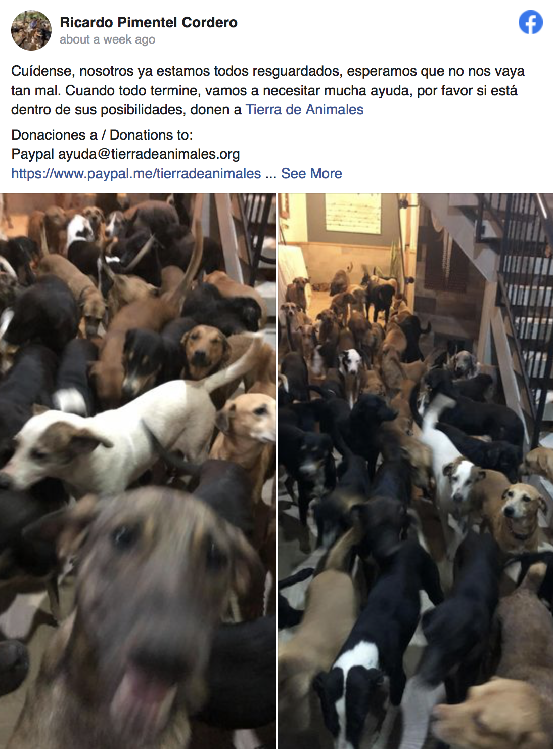 Rescue dogs-awaken