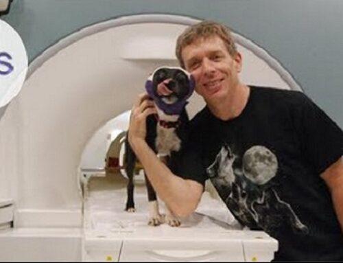 How Dogs Love Us | Dr. Gregory Berns | TEDxAtlanta