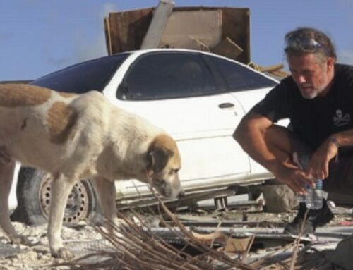 Guy Uses Drones To Rescue Animals From Disasters
