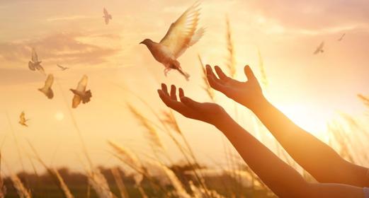 lifted-hands-dove-sunset-awaken