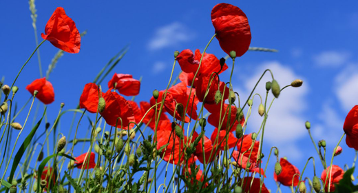 flowers-blooming-verb-awaken