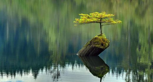 Mindfulness-awaken