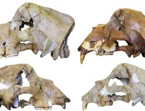 An Extinct Cave Bear's DNA Was Still Readable After 360,000 Years
