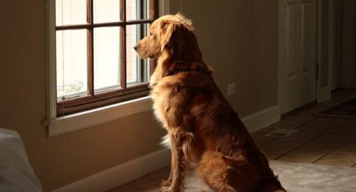 dog-staring-at-the-window-awaken