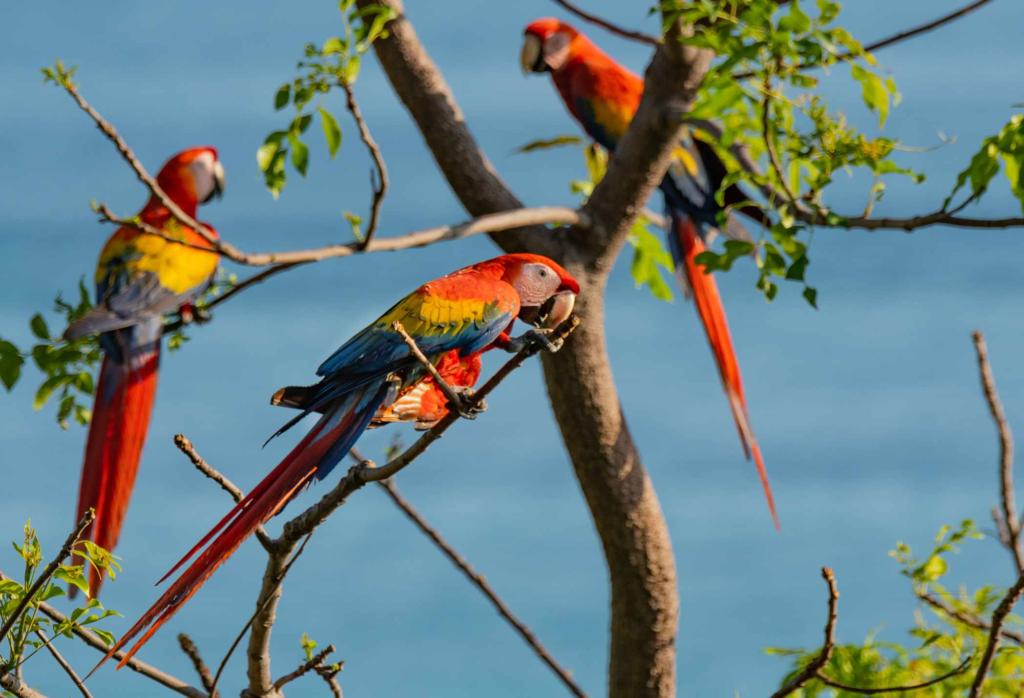 awaken-Scarlet Macaws