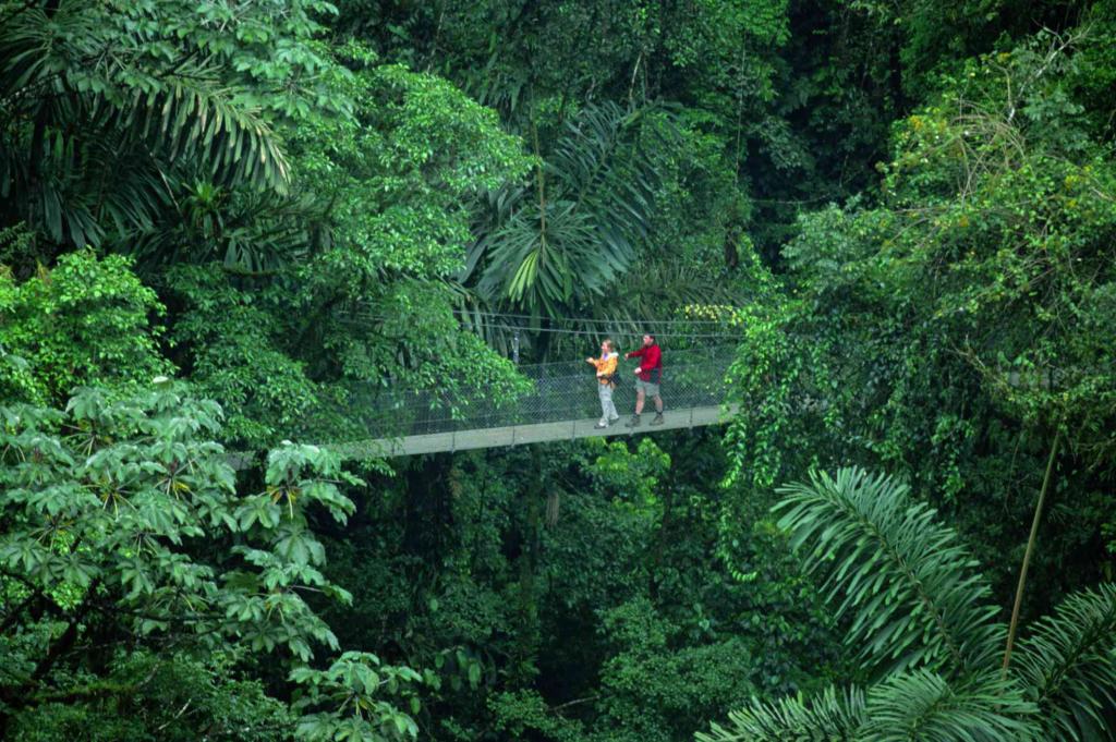Hanging bridges in La Tortuna-awaken
