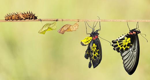 Butterflies-Tranformations-awaken