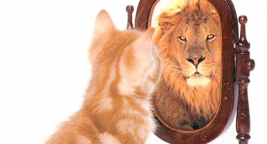 Cat-mirror-lion-awaken