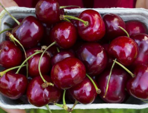 Top Health Benefits of Cherries & How to Enjoy Them – Ocean Robbins