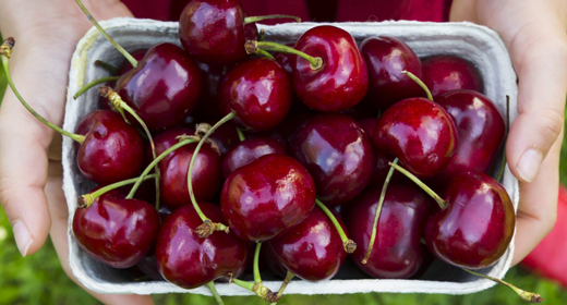 Cherries-awaken