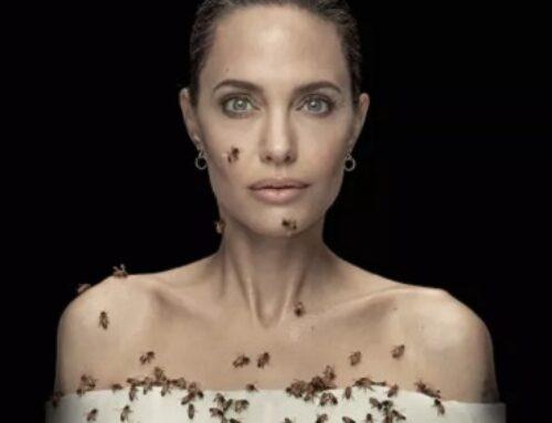 Angelina Jolie Shines Spotlight On Women Beekeepers