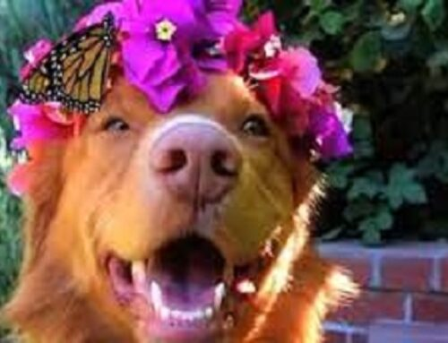 This Dog Is Best Friends With Butterflies