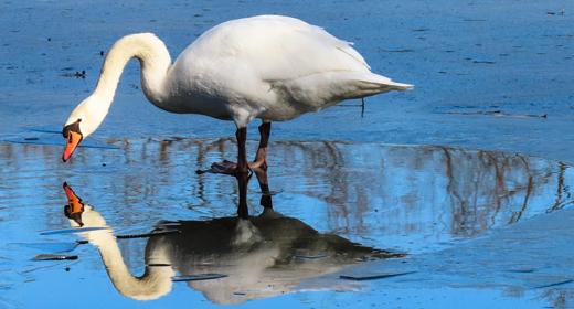 reflection-awaken