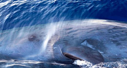 Eye-contact-with-Sperm-Whale-awaken