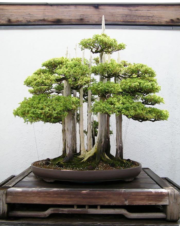 Bonsai Forest-awaken