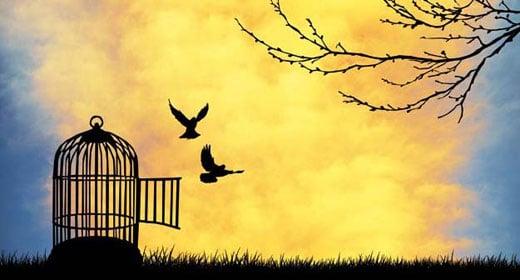 freedom-to-fly-awaken